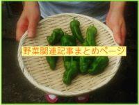 野菜まとめ