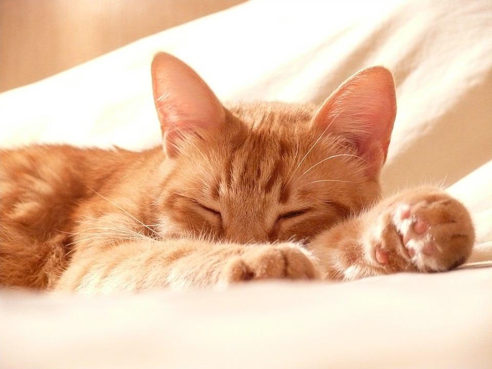 猫ってなんでずっと寝ているんだろう?