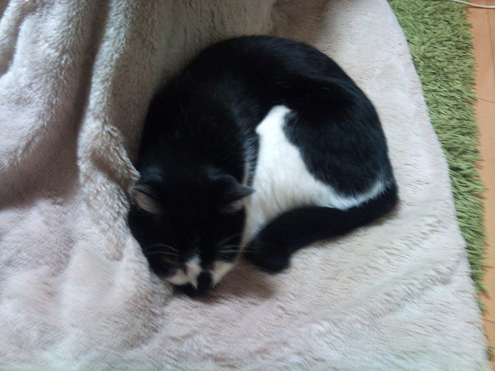 猫が毛布を吸う理由について