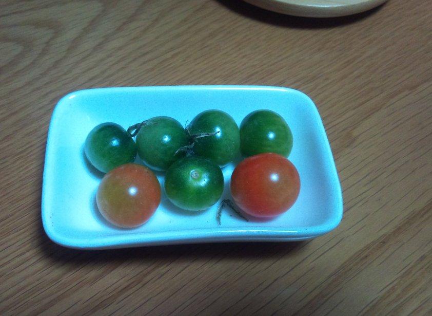 冬場のトマト栽培について