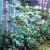 嫌気性堆肥の新しい使い方を検証