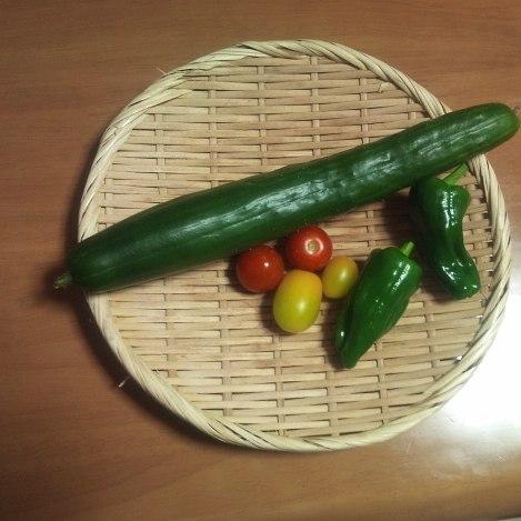 今日はなかなか豊作です。ついにトマトが初収穫。これからどんどん取れてくれることでしょう。楽しみだ。#家庭菜園 #トマト