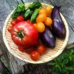 今日は野菜が豊作です