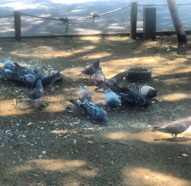 再び静岡に到着!移動時間が長いのでクタクタ。相変わらず鳩が多い謎の駅です