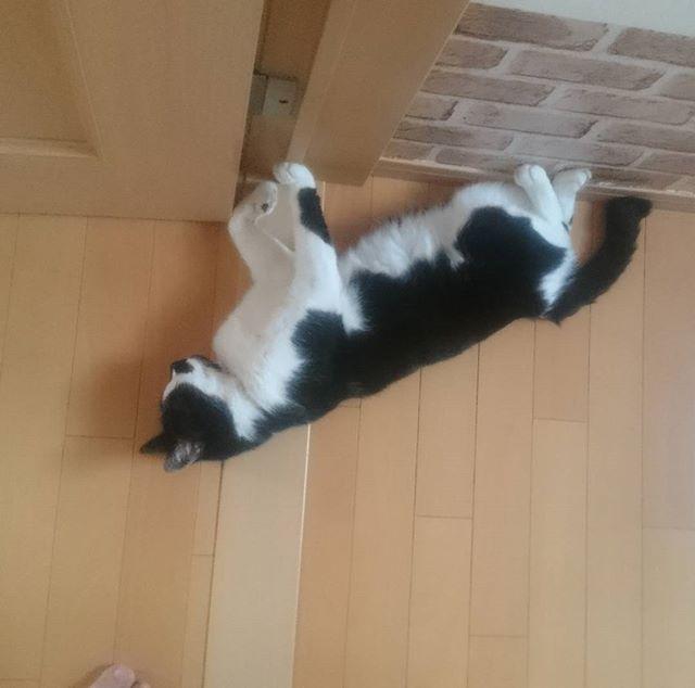 ドアを支えるように眠るもぐ氏。彼は熱くなると床で寝るのを好みます