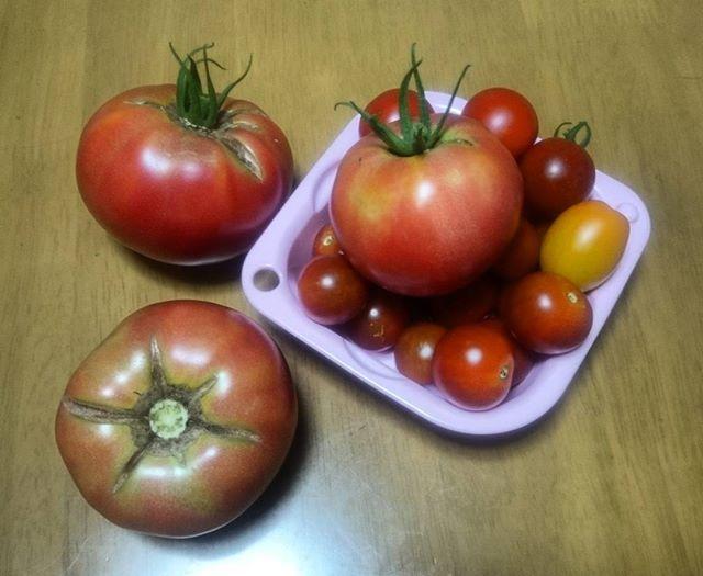 怒涛のトマトラッシュです。個人用ならこれでも十分。大玉は脇芽も育てていないので、もう少しスローペースで成長してもいいぞよ(•ө•)♡