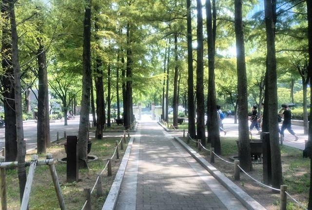 先程の写真と同じ場所です。この時期は植物が元気ですね。三宮は猛暑で真夏のようでした。明日はビアガーデン( ̄ー ̄)ニヤリ楽しみです#神戸 #kobe #東遊園地