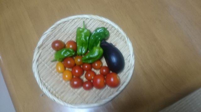 本日はパソコンから投稿。文字入力がしやすいので楽でええです。今日はプチトマトが中心です。(^^)#家庭菜園 #プチトマト