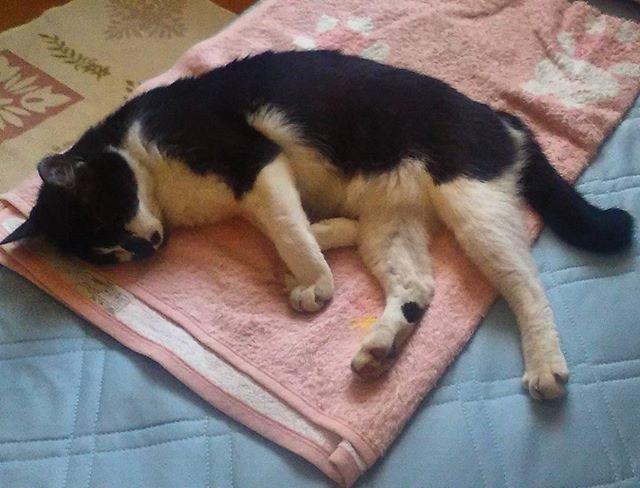 タオルケットの上で横になるモグさん。ええなぁ、僕ものんびり眠りたい。さぁご飯代を稼ぎに行ってこよう。( ̄ー ̄)ニヤリ