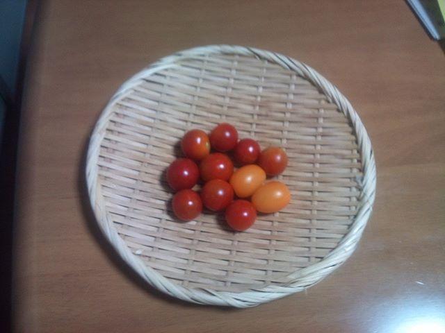 今日もプチトマトとイエロートマト。明日にはまた大玉トマトが採れそうです(^-^)大玉で冷蔵庫がいっぱいになってきたぞ. ( ̄▽ ̄)ニヤリ#家庭菜園 #トマト #tomato