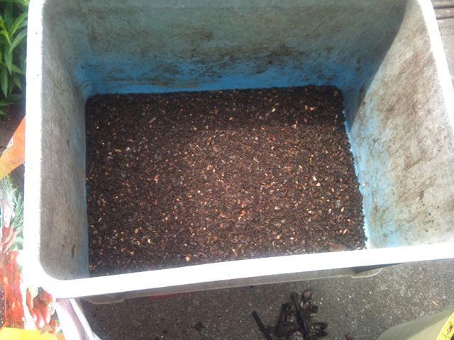 続きです。その後通気性のいいコンポストに移してさらに二週間かけて好気性発酵を進めていきます。第一工程で分解されやすい状態になっていることもあり、好気性発酵用のコンポストへ移動後の翌日にはほぼ全て原型を留めない状態にはなりますが、その後2週間でさらに分解を進めていきます。2週間後に出来上がった堆肥がこちら。2週間分の生ごみから作りますが実際に残る自家製堆肥は非常に少ないです。袋に入れてさらに追熟させてから野菜作りに活用しています(^^)ちなみに堆肥作りに臭いと虫との戦いは避けられません。あまり気にしすぎない鈍感力も必要です#家庭菜園 #堆肥
