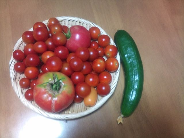 今日はプチトマトを中心になかなか豊作です。ただ大玉トマトは後7個程を残すだけになりました。やはり苗一つで取れる数に限りがありますから、プチトマトよりも圧倒的に数は少ないです。その分甘くて美味しいですけどね。ちなみに栄養価はプチトマトの方が多いのだそうです。来年はもう少し大玉トマトの苗を増やそうかね#家庭菜園 #トマト