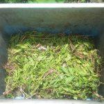 畑の雑草マルチの草を補充