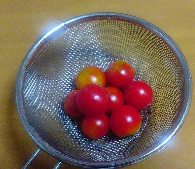本日の収穫プチトマトです。トマトは勢いが落ちてきましたが、これからはナスとピーマンが採れるはずです。彼らは大器晩成型なので楽しみです。しかしトマト好きの私としてはもうしばらくトマトにも踏ん張ってもらいたい、、