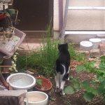 裏庭に移植した猫草を食べているモグさん