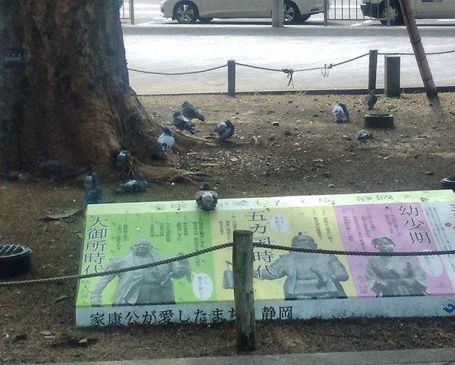 三度お茶と富士山と大量の鳩の静岡へ。バタバタしましたがようやく一段落。ん、鳩が今日は少ないような??
