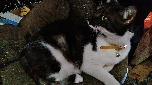 もう一枚アゴちゃんの写真です。実家には全てで三匹の猫がいるのですが、内二匹は私の顔を忘れたのか警戒しています。私が近づくと逃げていくので寂しいばかり。写真を取ることも出来ませんでした。アゴちゃんは呑気なのか逃げることもありません。#猫 #cat