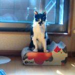 モグさんは猫型の爪研ぎの上で日向ぼっこ中