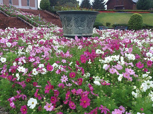 先日訪れたフルーツフラワーパークの入り口での一枚です。綺麗な花が歓迎してくれました。