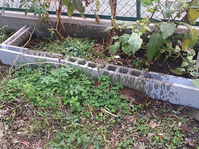 みかんの木を植えて少し畑が狭くなったので、ブロックのスペースを広げました。ブロック一つ100円なり。安いなあ