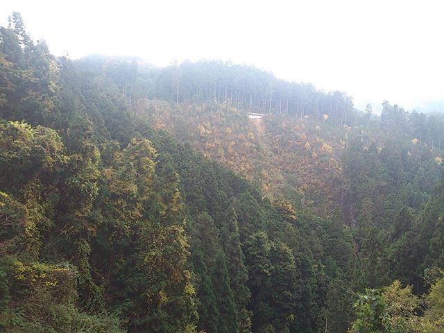 しばらく前のことですが和歌山へ一泊で出かけていました。実は亡くなったお義父さんが和歌山の山奥に土地を持っているらしく、場所的に価値はあまりないそうなのですが一度はどんな場所か見に行こうということに。この写真は目的地にある程度近づいた時の写真です。一面山しかありません。