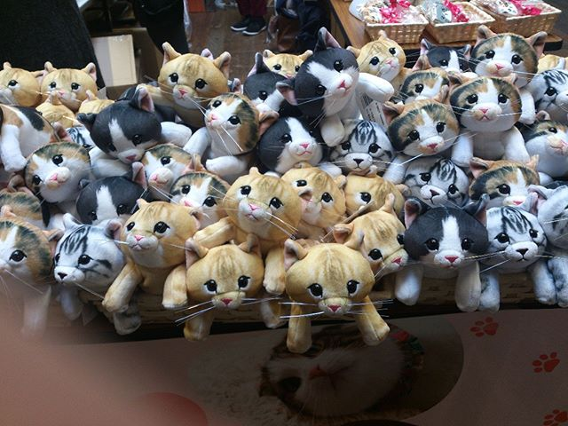 神戸で開催されていたネコ市ネコ座の物販ブースにて撮影しました。この猫たちの飛び出そうとする勢いがたまりません。か、可愛すぎるぞ!#ネコ #猫 #cat #ネコ市ネコ座