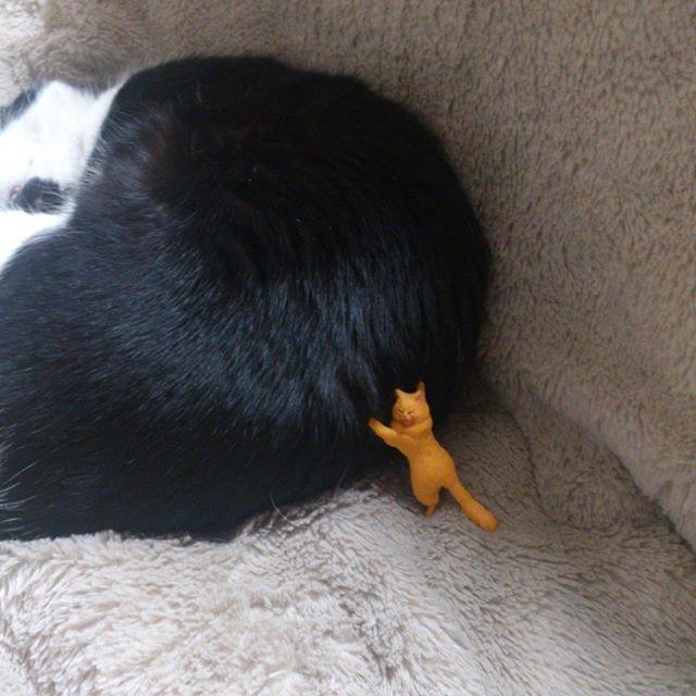 ぬあ〜! 少々押したところで眠ったモグさんが動くことはありませんぞ!#猫 #cat