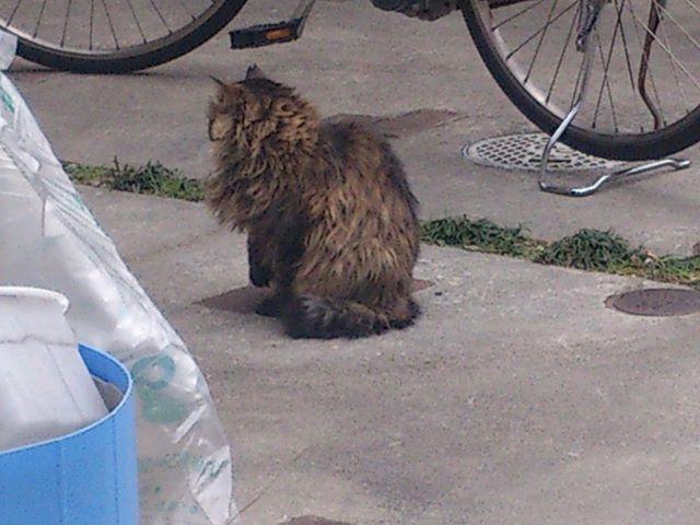 最後のネコ君はこちら。立ち上がるにゃんこ#猫 #ネコ #cat