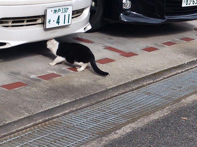 今日の外出で見かけた猫ちゃんです。今日は数多くの猫君に出会いました。まずは車を臭う彼です。#猫 #ネコ #cat