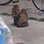 外出先で見つけた色々なネコ君たち