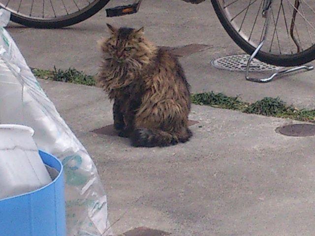 何見てるんニャ! コラ!また睨まれてしまいました(^^) #猫 #ネコ #cat