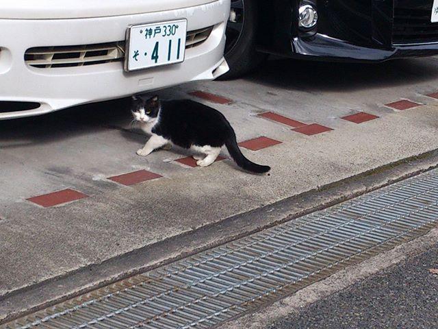 写真を取っていることに気づき睨まれました。「なにガンつけてんにゃ!」 #猫 #ネコ #cat