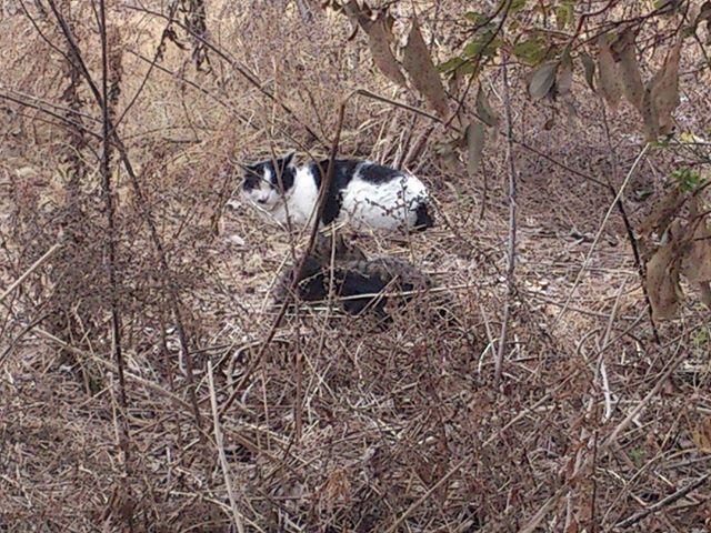 今度は空き地で発見。こちらは子猫を含め五人家族でした。近づいて怖がらせてもいけないので遠くから撮影。#猫 #ネコ #cat