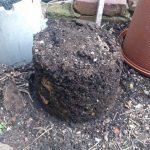 冬場のプランター型コンポストの堆肥化状況