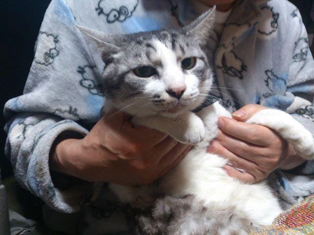 実家にて。久しぶりミニー君。元気にしていたかね?彼は飼い猫生活をしていたところ急遽家出してしまい一年間行方不明になっていたことがあります。一年経った所を見つけて一緒に帰ってきた少し変わった経歴があります。
