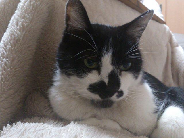 黒目がパッチリ!なモグさん。猫は夜など暗い場所では黒目が大きくなって、より可愛くなりますね。#cat #猫