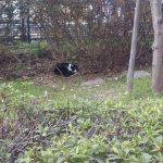 外出先で見かけた猫くん。