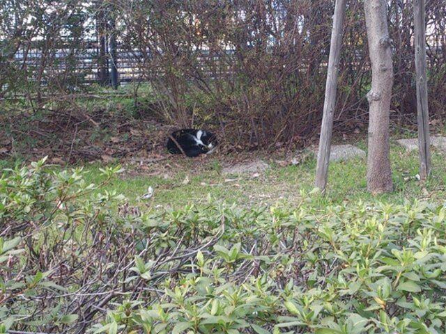 外出先で見かけた猫くん。草むらに隠れてひなたぼっこ中です。