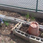 ブロックが残っていたのでトマトの予定地を拡大しました。