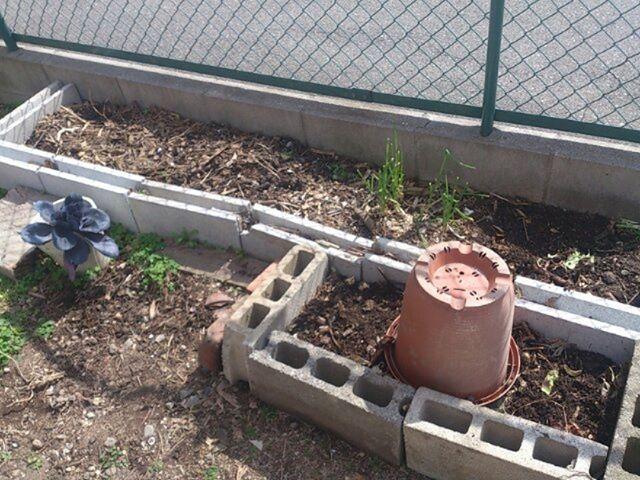 ブロックが残っていたのでトマトの予定地を拡大しました。(プランターを置いているあたり)置き方を工夫したらまだまだ増やせそうだな。直植えのほうがプランターよりも管理が楽なのと日当たりもいいので段階的に拡大していくつもりです。#家庭菜園 #プランター #トマト