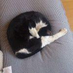 丸くなって眠るモグさん。顔を隠して恥ずかしいのかな?