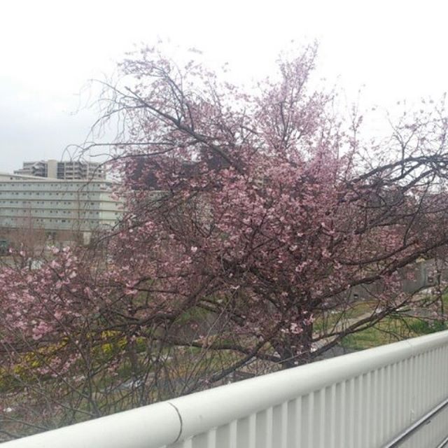 外出先での一枚。桜もちらほらと見かけるようになった気がします。それより雨で寒い!はやく事務所に帰ろう