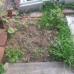紫蘇の予定地は雑草が伸び放題。