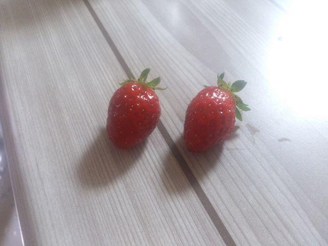雨の中苺を収穫しました。少し小さめですが、美味しそう!