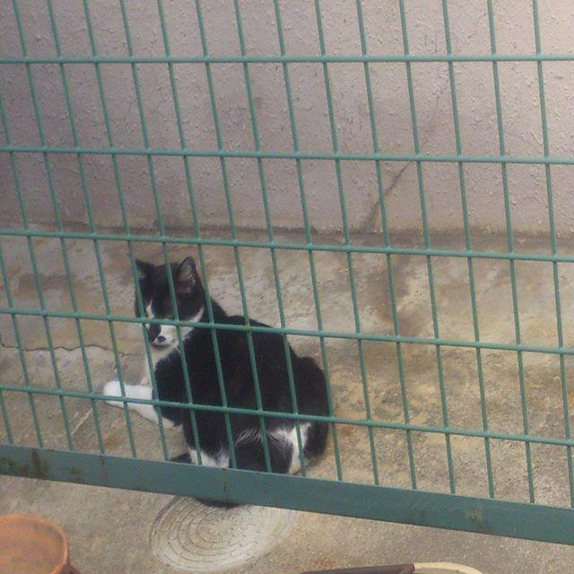 悪いことばかりする猫はこうだ!檻に閉じ込めました。なんてこともなく、近くのマンションにあるフェンスです。日陰になるので、暑い時はよくここにいますね