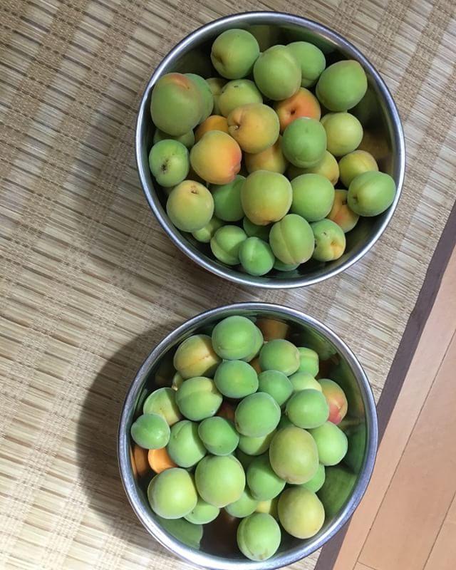 こっちは無事に収穫できた梅の実です。収穫以降は奥さんにバトンタッチ。梅干しとジャムをつくってくれています