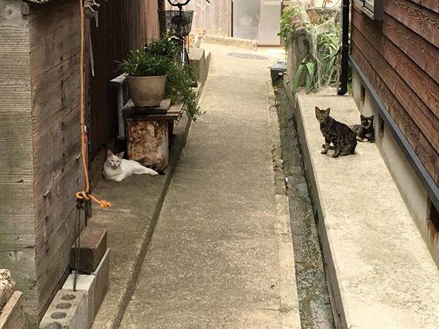 道を進むとあらたな猫くんたちが。これでもまだ1部です。何見とんねんコラと言わんばかりなかなかの迫力! 猫の集会でもしていたのでしょうか。