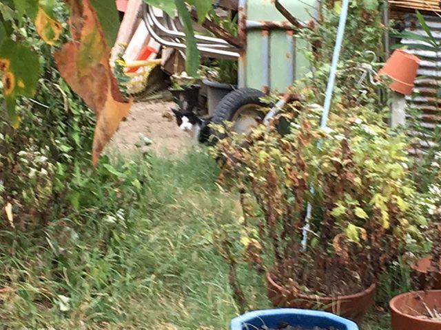 こちらの猫くんが旅館の近くで見つけた猫です。2匹だけかと思いきや予想外に数が多いことが後ほど判明しました