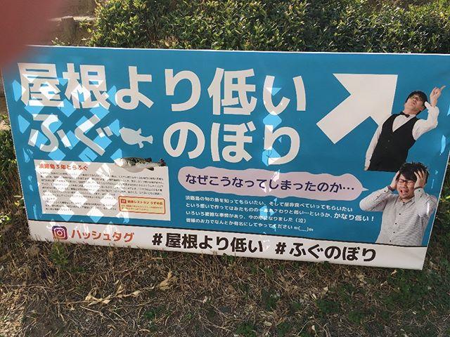 ちょこちょこと狙って作ったであろうものもあります。これなんて最初からわかってただろうに#ふぐのぼり #淡路島