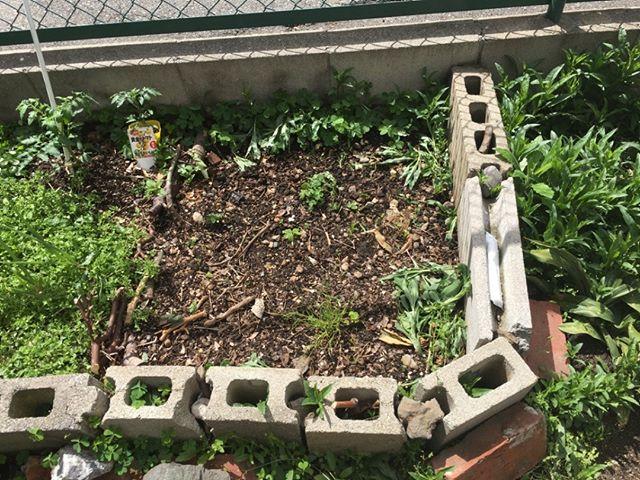 ここは新しく広げた土地です。まだ作ったばかりですが、出来ればここはモグ用の草を育てたい#家庭菜園の野菜 #猫草